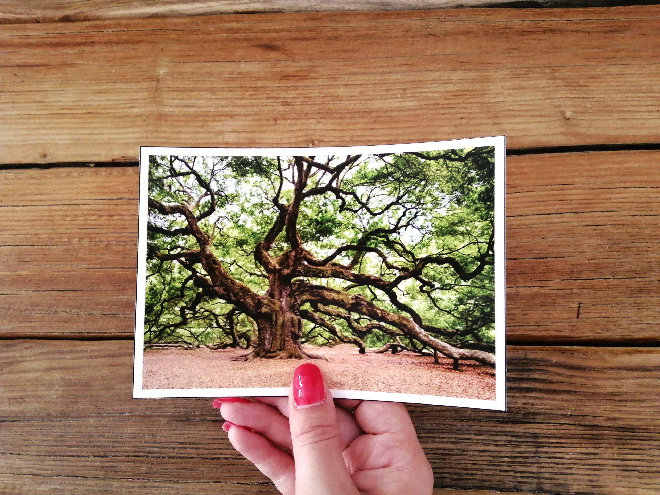 environment postcard